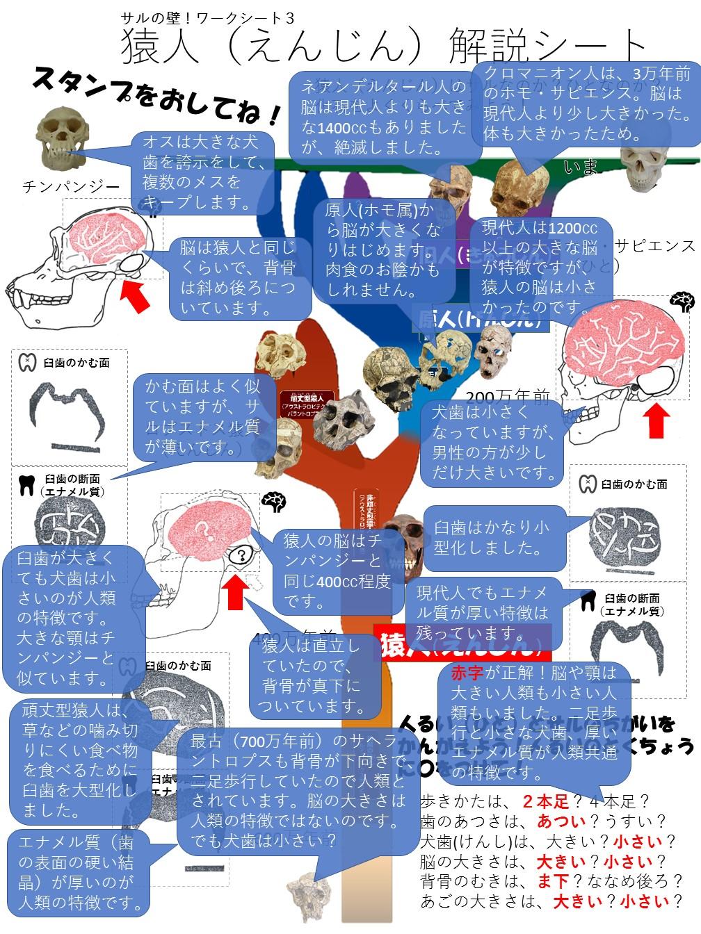 http://c14.um.u-tokyo.ac.jp/wiki/public/kyokasho/wiki.cgi?page=%A5%B5%A5%A4%A5%A8%A5%F3%A5%B9%A5%A2%A5%B4%A5%E92017&file=worksheet3A%2Ejpg&action=ATTACH
